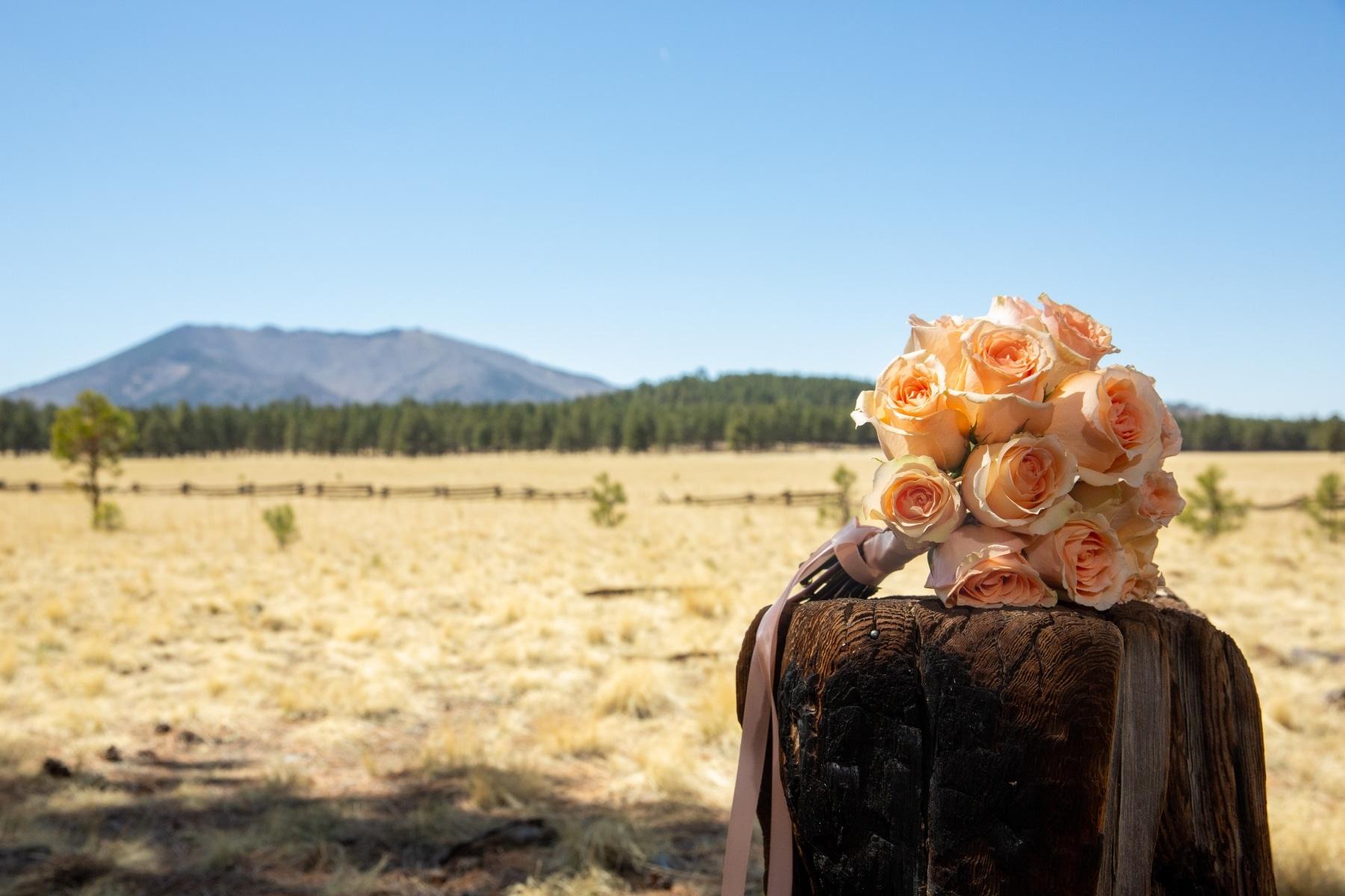 Portfolio   Flagstaff Forest Weddings